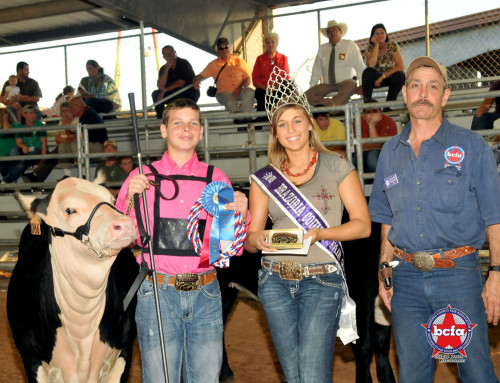 2012 Brazoria County Fair. Breed Champion Heifer, shown by Dylan Harris.