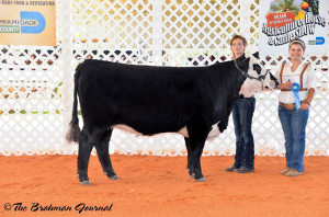 Triple L Louise Z102 was crowned Grand Champion at the 2014 Miami International Cattle Show, April 11.