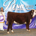 C R111 Ms Hereford 2088 ET-Reno