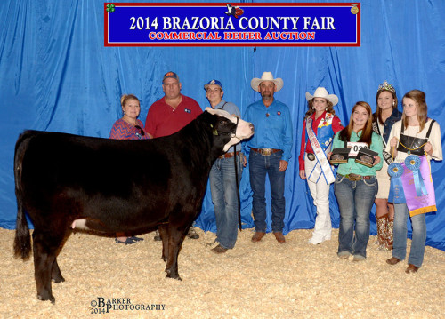 2014 Brazoria County Fair Commercial Heifer Sale.